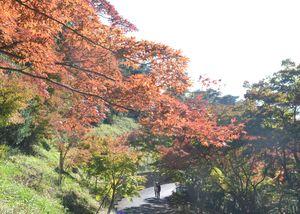 葉が色付き紅葉が見頃を迎えたもみじ谷