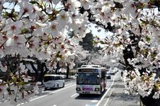 桜ゆっくり開花 宇都宮で最長更新【動画】