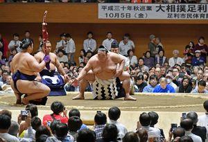 相撲 動画